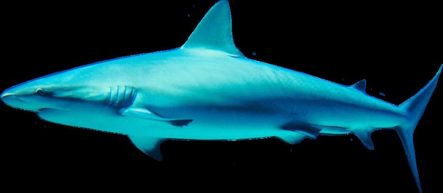 Sharks PNG image free Download