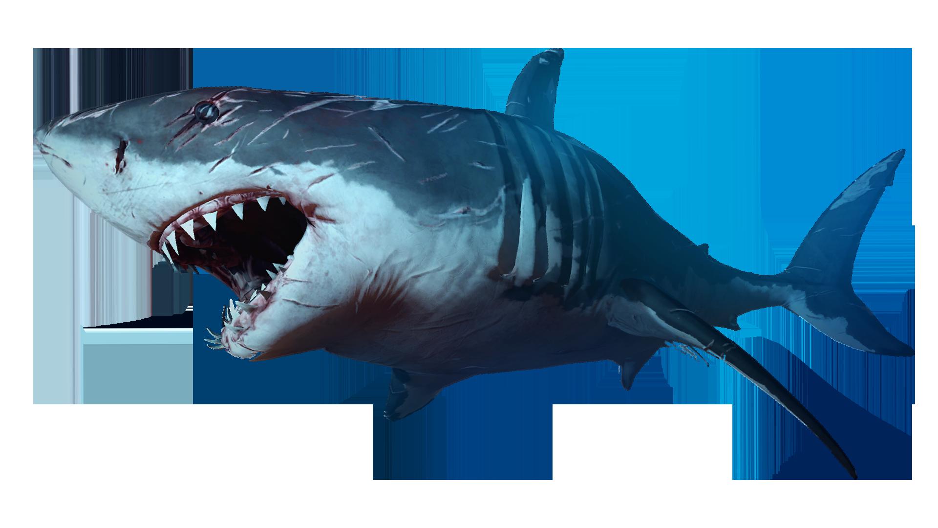 Shark Png Download transparent sharks png for free on pngkey.com. pngimg com