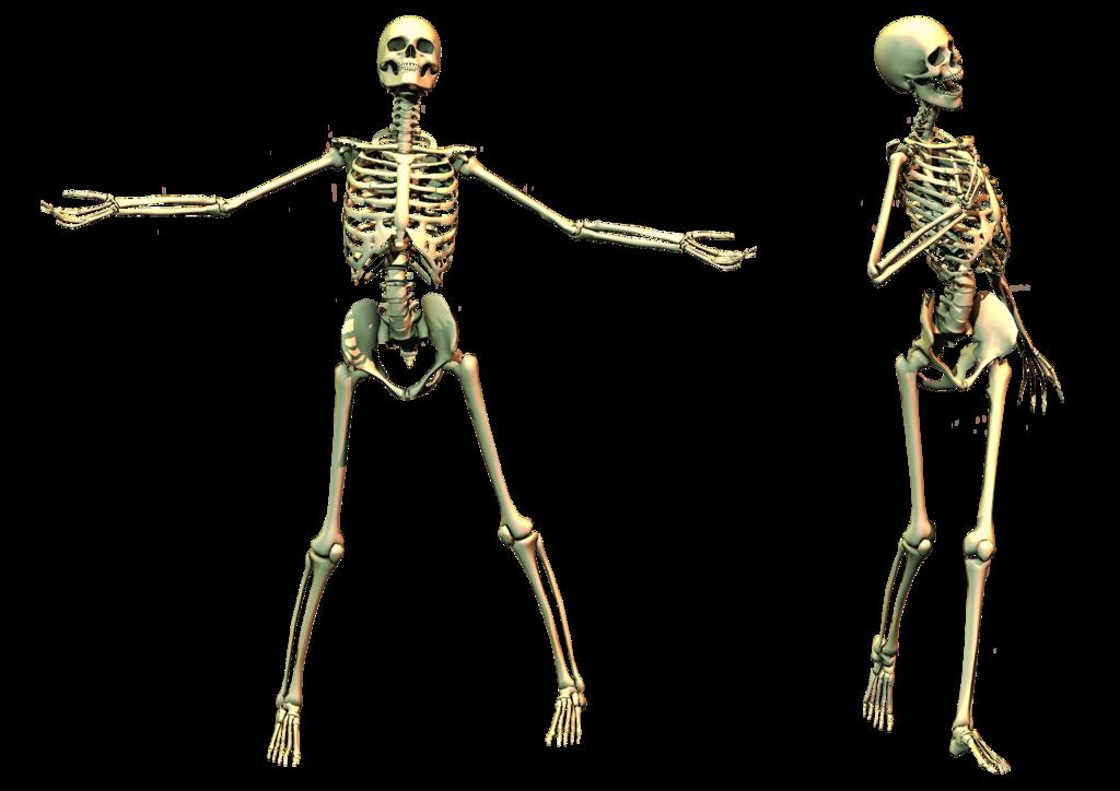 Skeleton PNG images  image