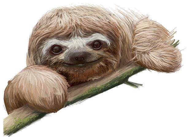 Ленивец PNG