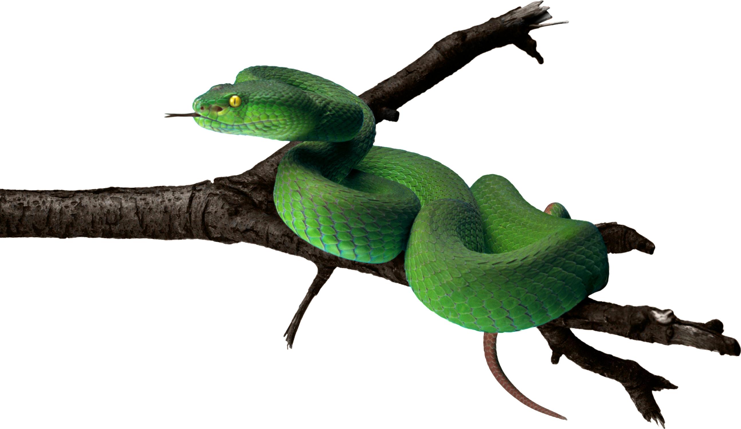 Зеленая змея PNG фото