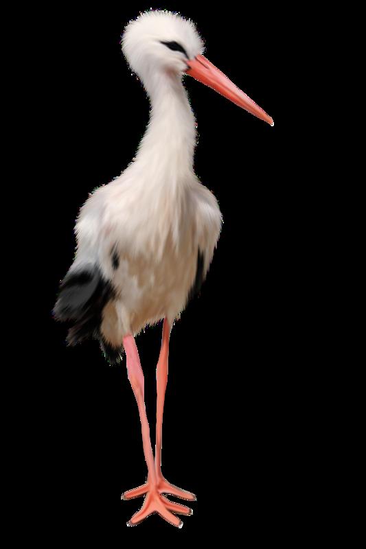 Stork PNG