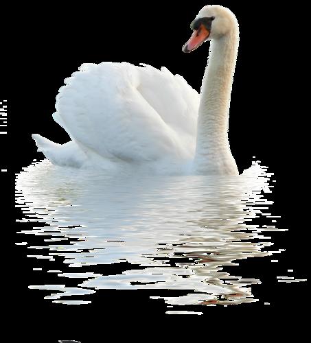 Лебедь PNG