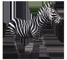 Zebra PNG image