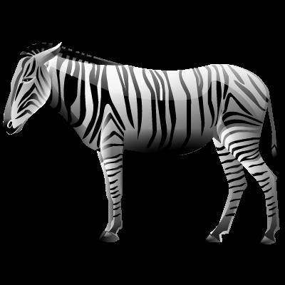 Зебра PNG фото