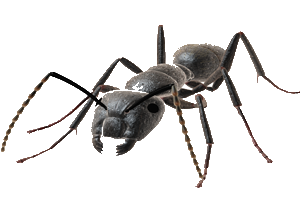 Ants PNG images Download