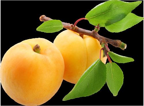 apricot png tree trunk clip art transparent tree trunk clip art free