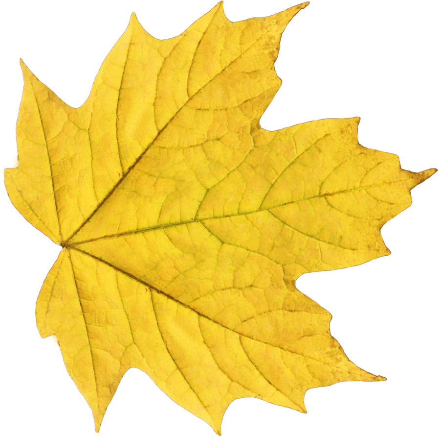 yellow autumn PNG leaf