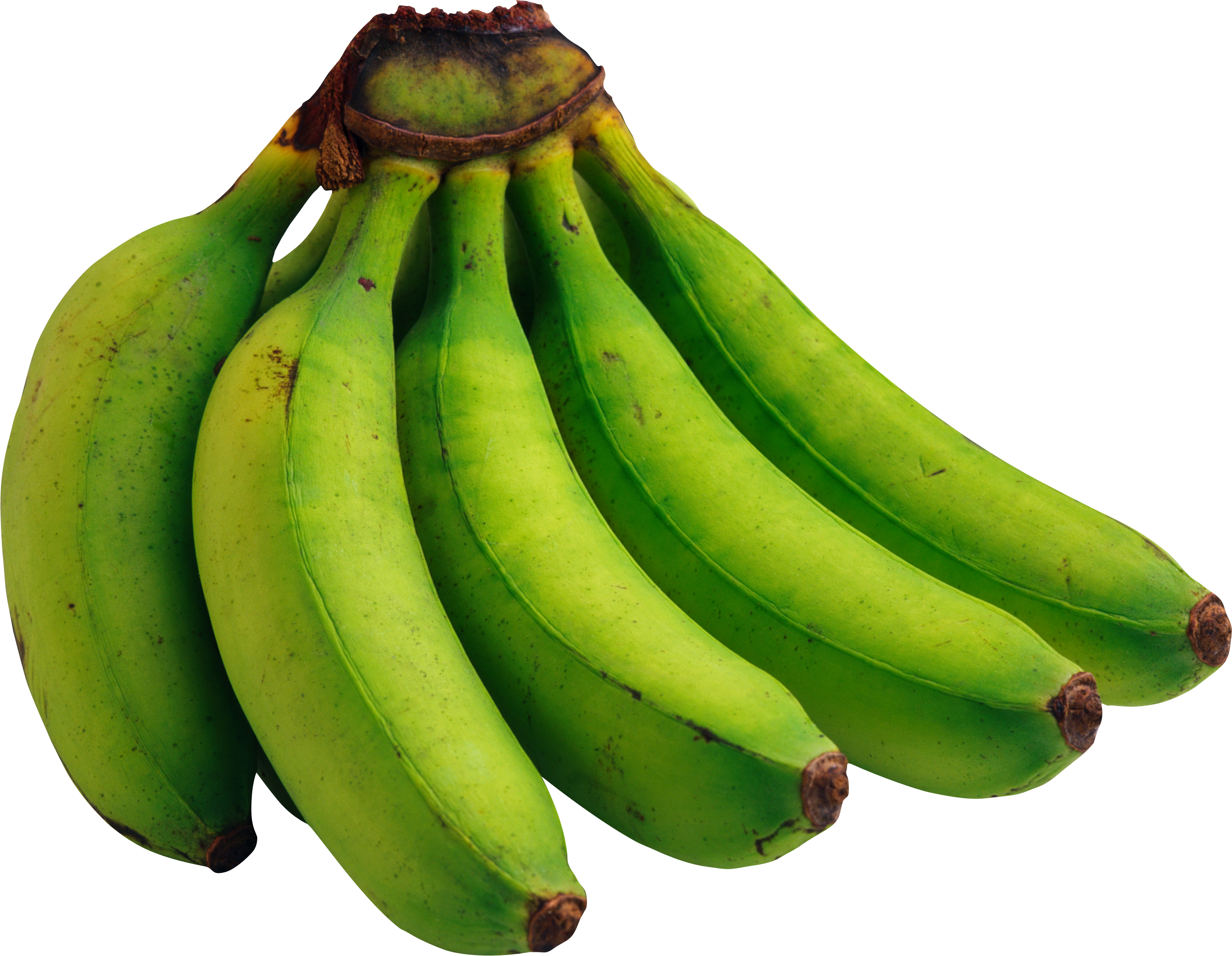 green bananas PNG image, free picture