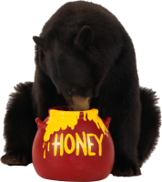 brown bear eats honey PNG image