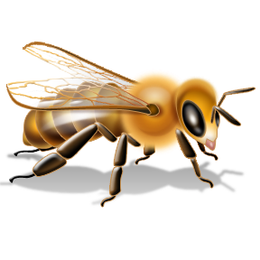 Bee PNG