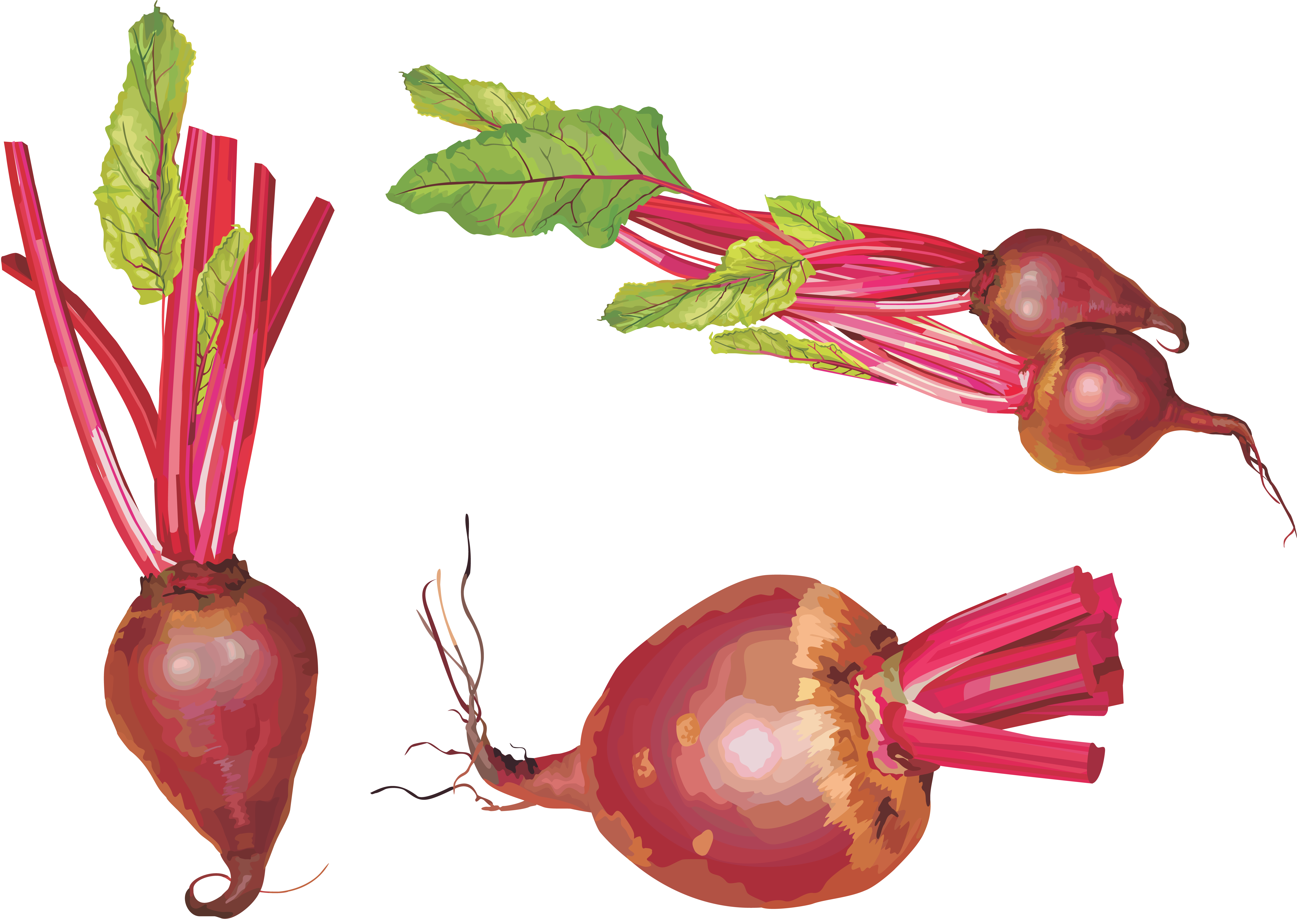 free clipart beets - photo #37