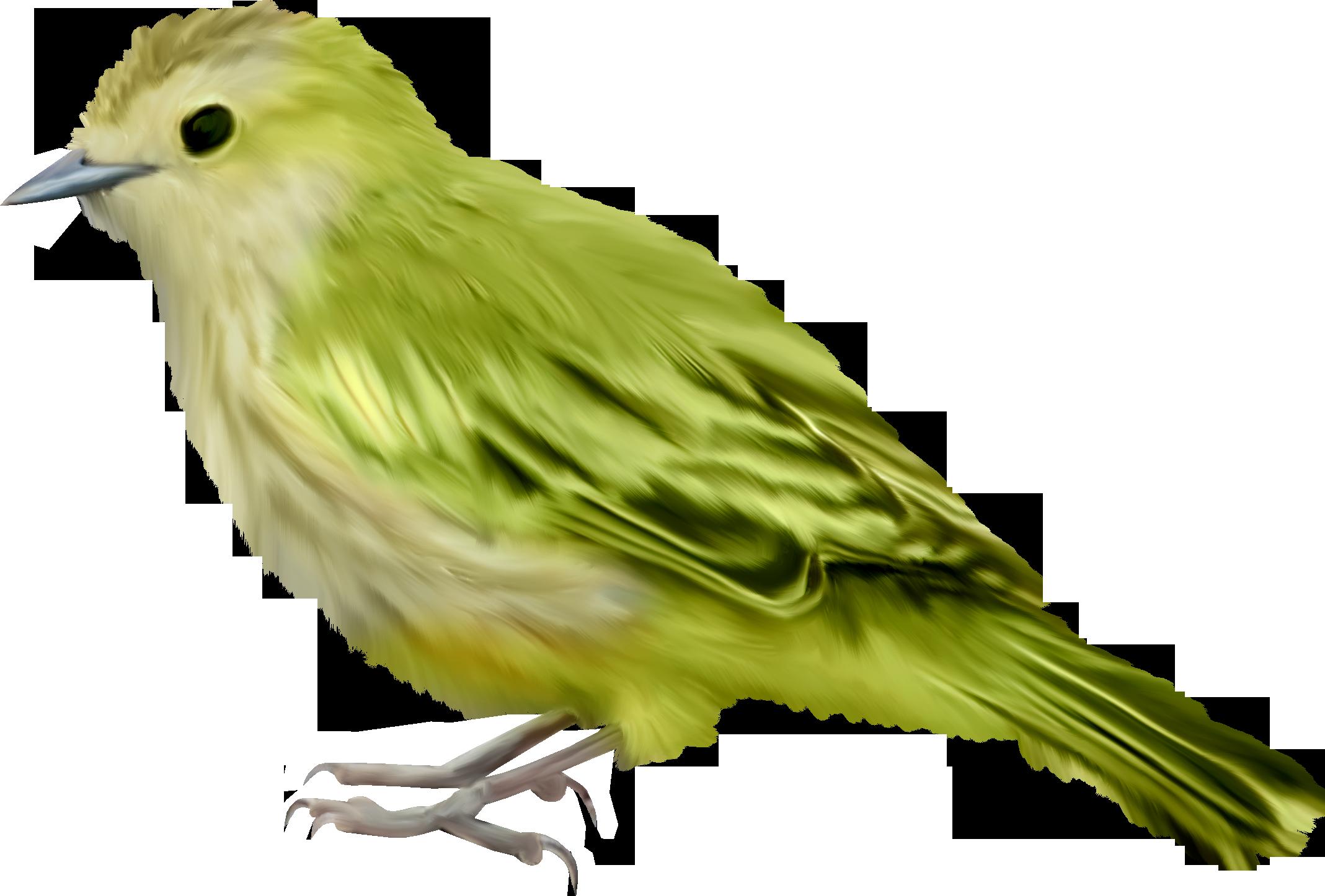 Home Design Free Download Bird Png