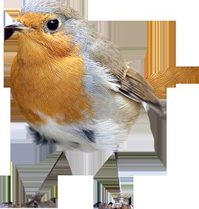 Bird And Heart Tattoo Designs