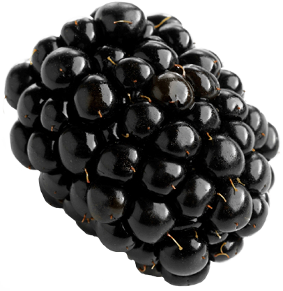 Blackberry PNG