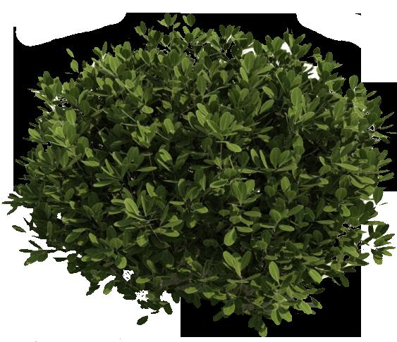 Bush PNG image