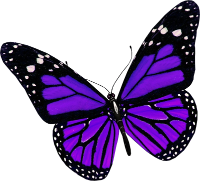 Purple butterfly PNG image