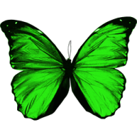 Green flying butterfly PNG image