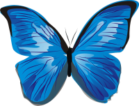 Blue butterfly PNG image