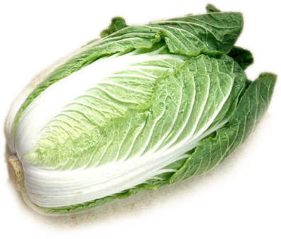 Cabbage PNG image