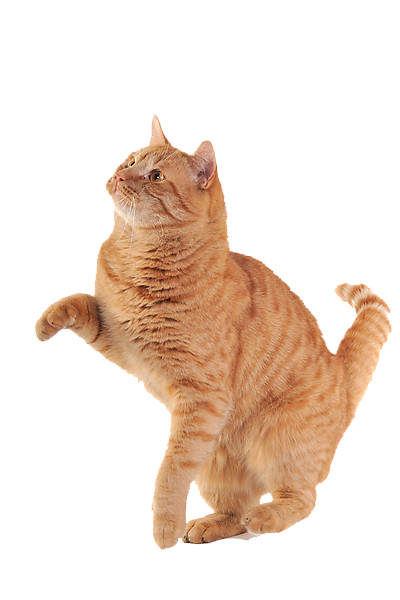 cat png image, free download picture, kitten