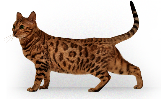 kitten png image, free download picture