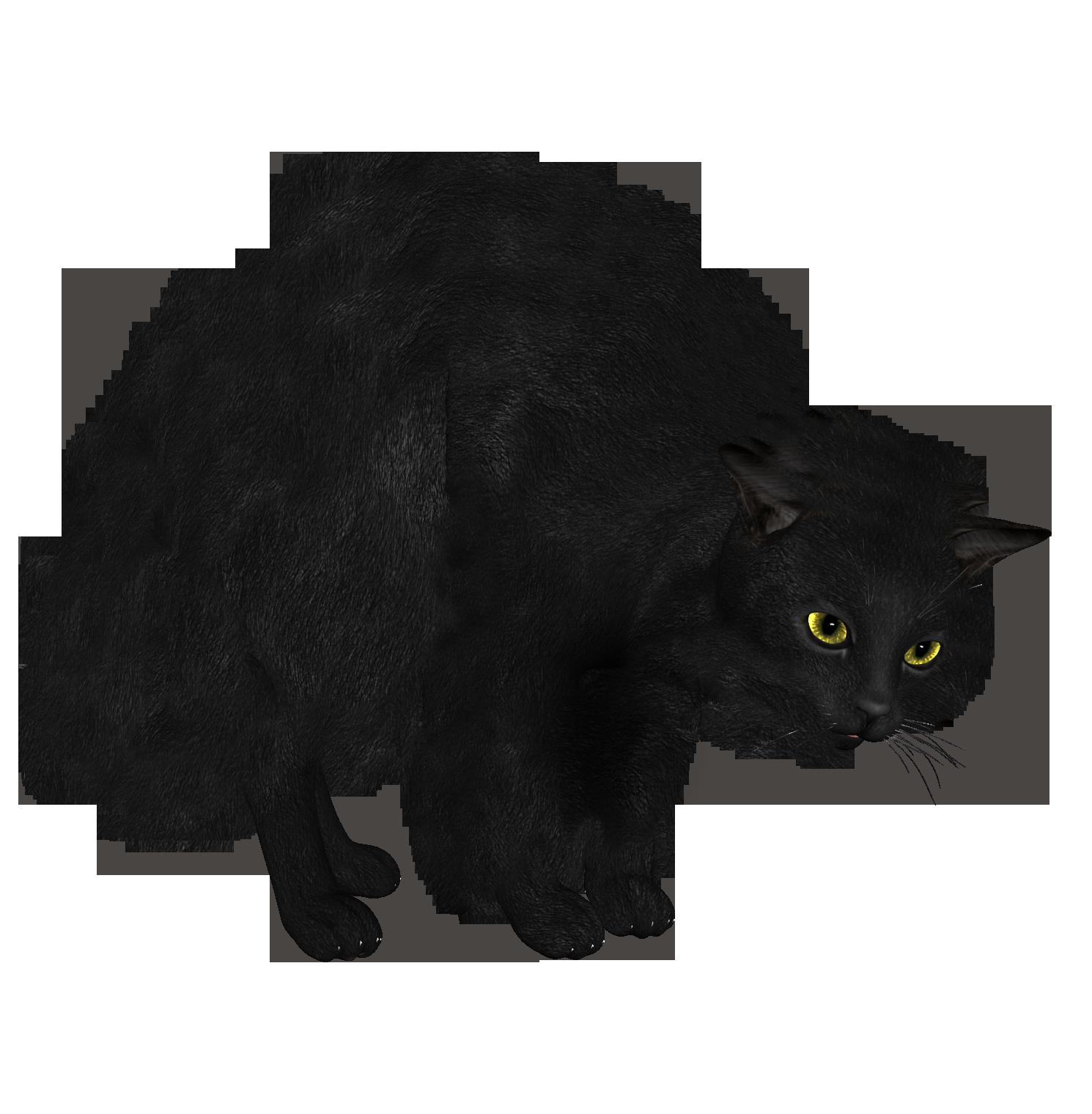 Картинки по запросу черный кот пнг