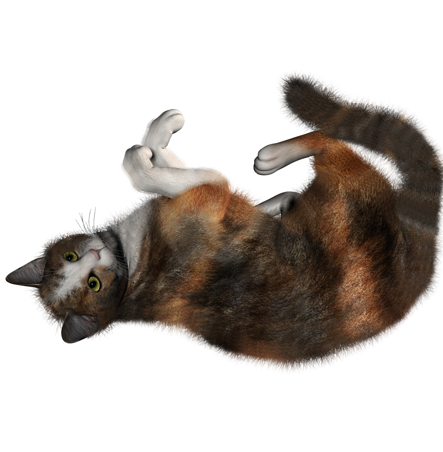 cat meowing no