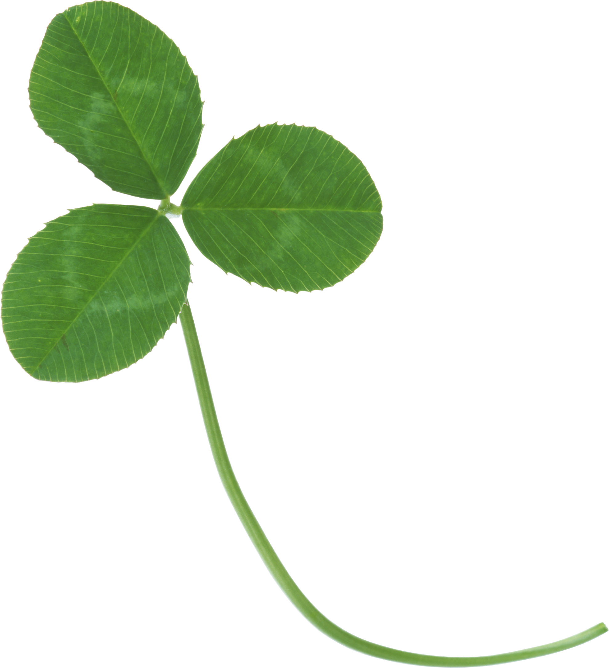 Green clover PNG image