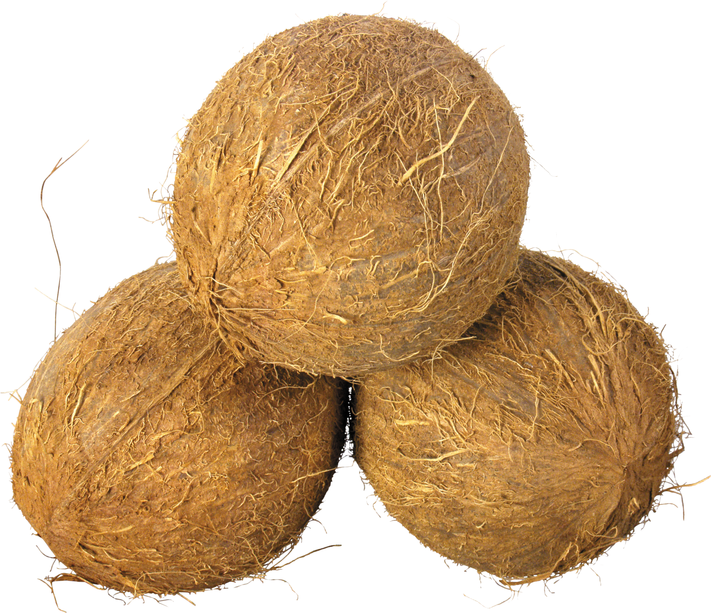 Coconuts PNG image