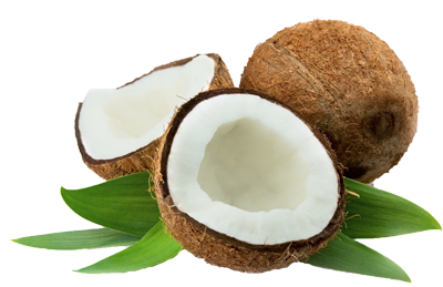 Coconut PNG image