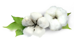 Cotton PNG
