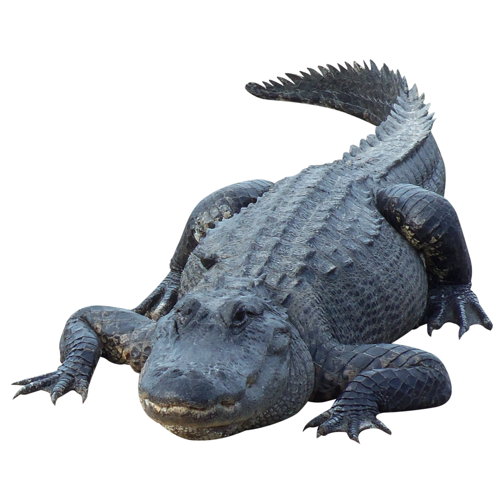 Crocodile PNG