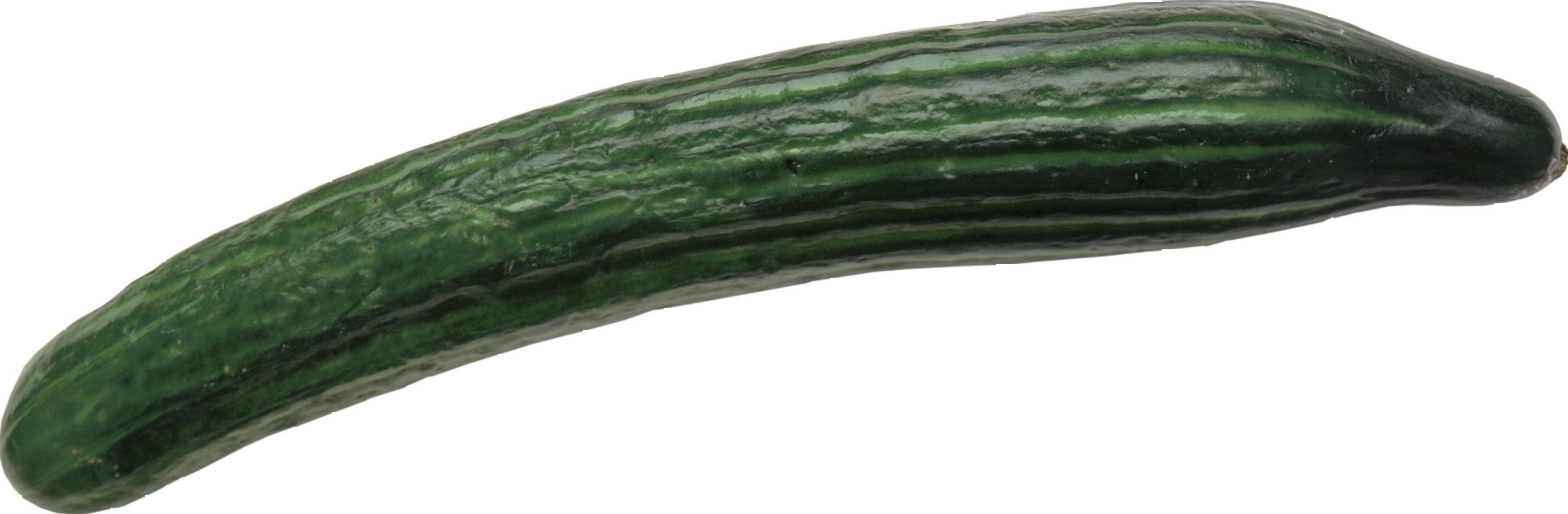 cucumber png clip art with transparent background clipart with transparent background on a cd