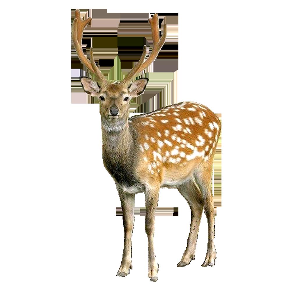 White Deer Painting