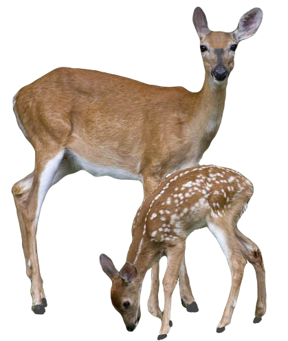 Stag And Doe Decoration Ideas
