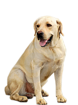small puppy png image, picture, download, dogs