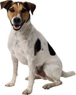 dog png image, picture, download, dogs