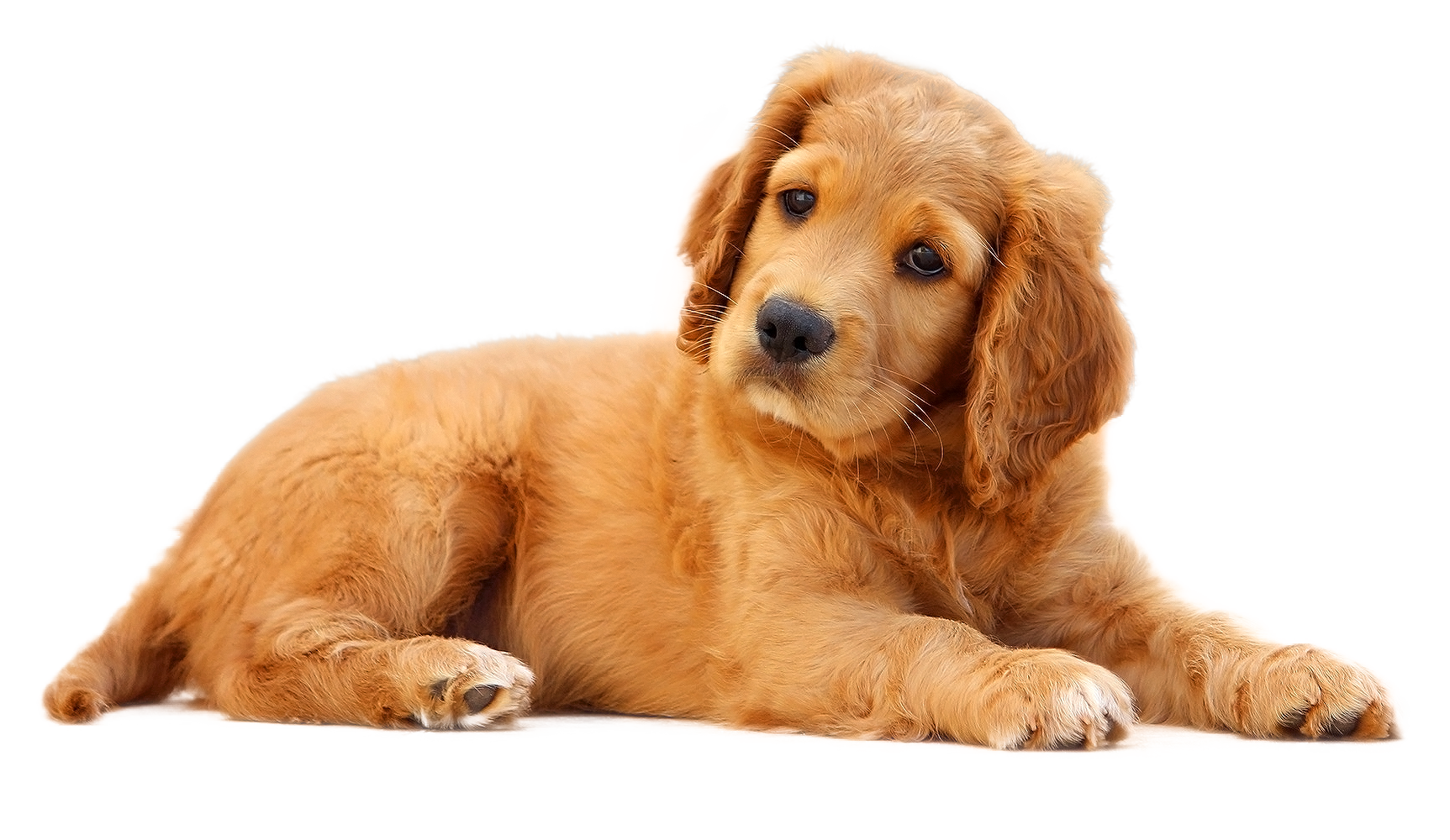 Sad Puppy Dog Face Png