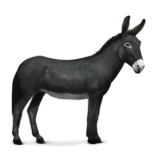 Donkey, ass PNG