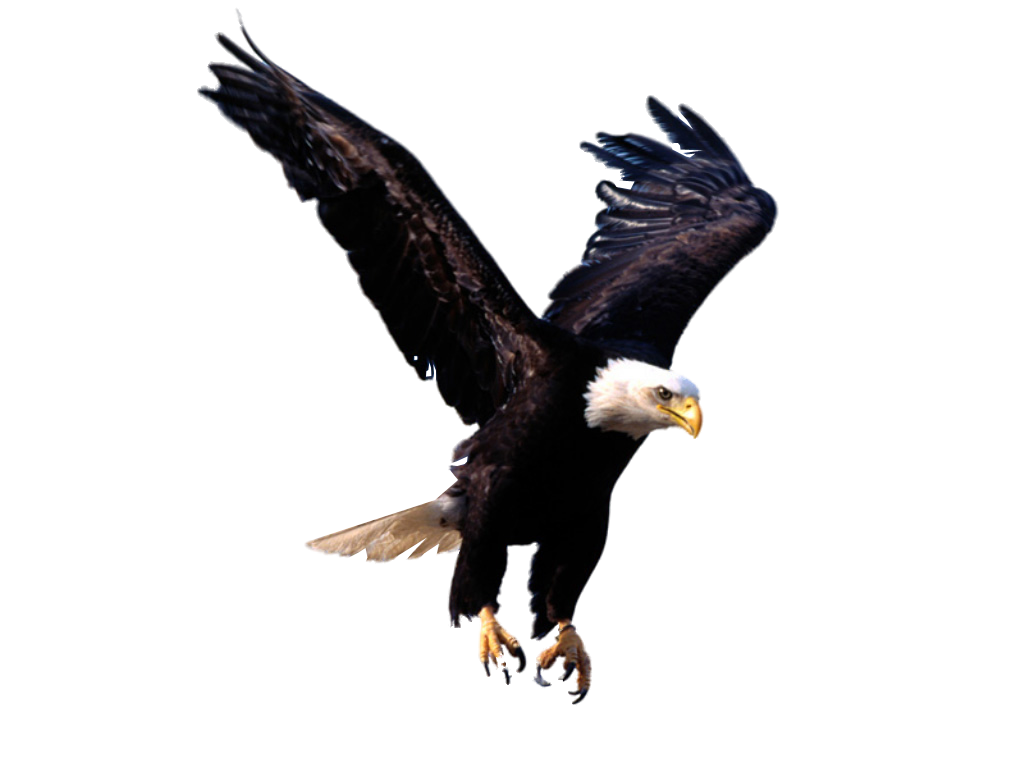bald eagle render by - photo #33