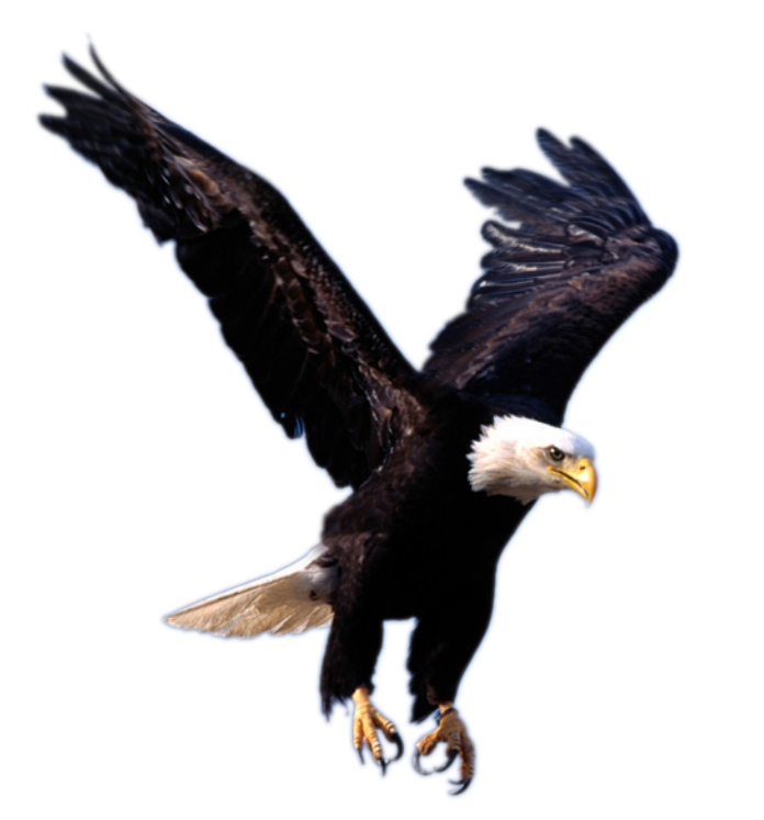 Eagle PNG image, free picture download