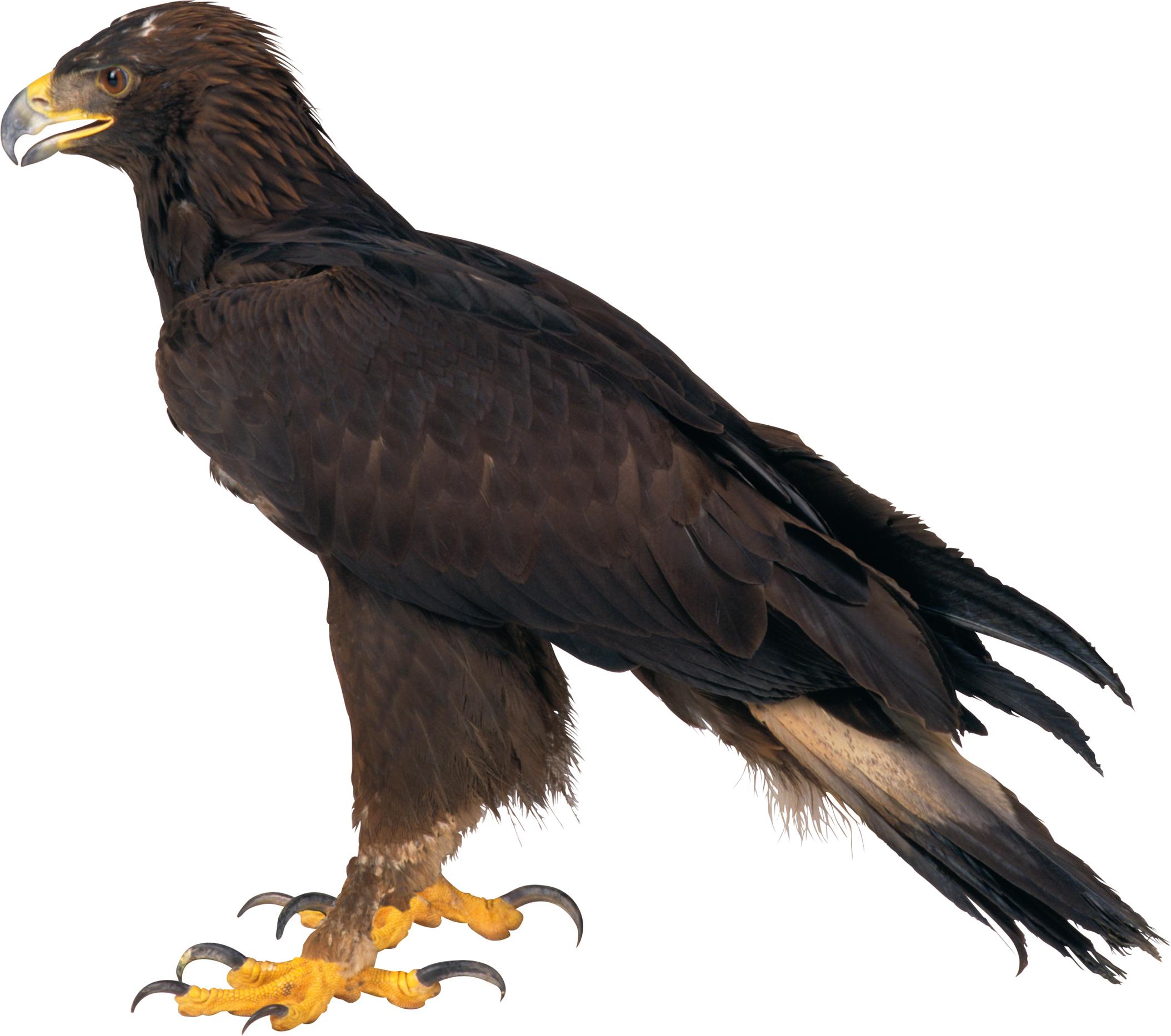Adler Transparent