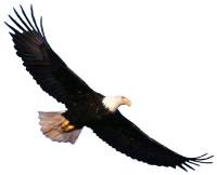 Eagle PNG image, free download