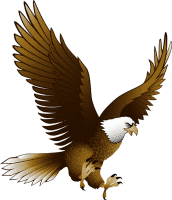 Eagle PNG image with transparency, free download