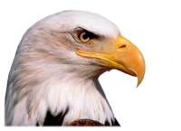 Eagle head PNG image, free download