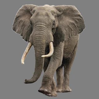 Elephants png images free download elephant png - Image elephant ...