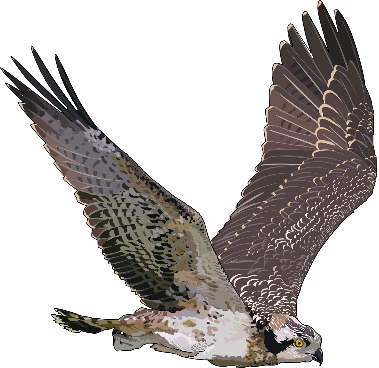 falcon png images free download hawk clipart free hawk clipart for