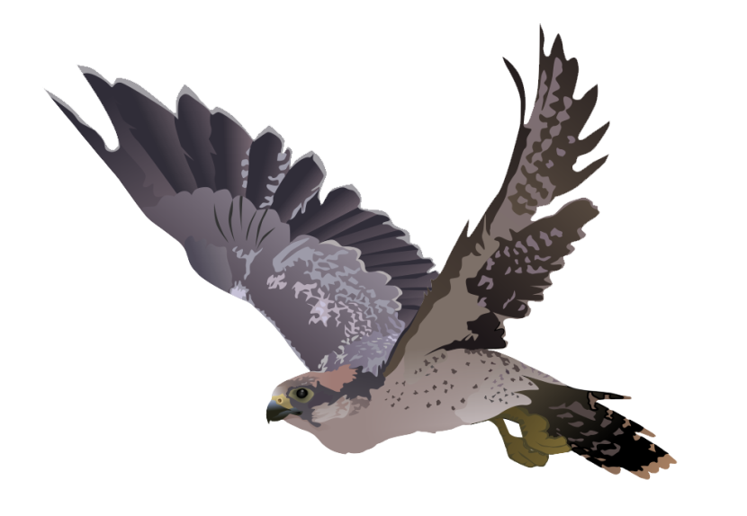 Eagle Web Design Murrells Inlet Sc
