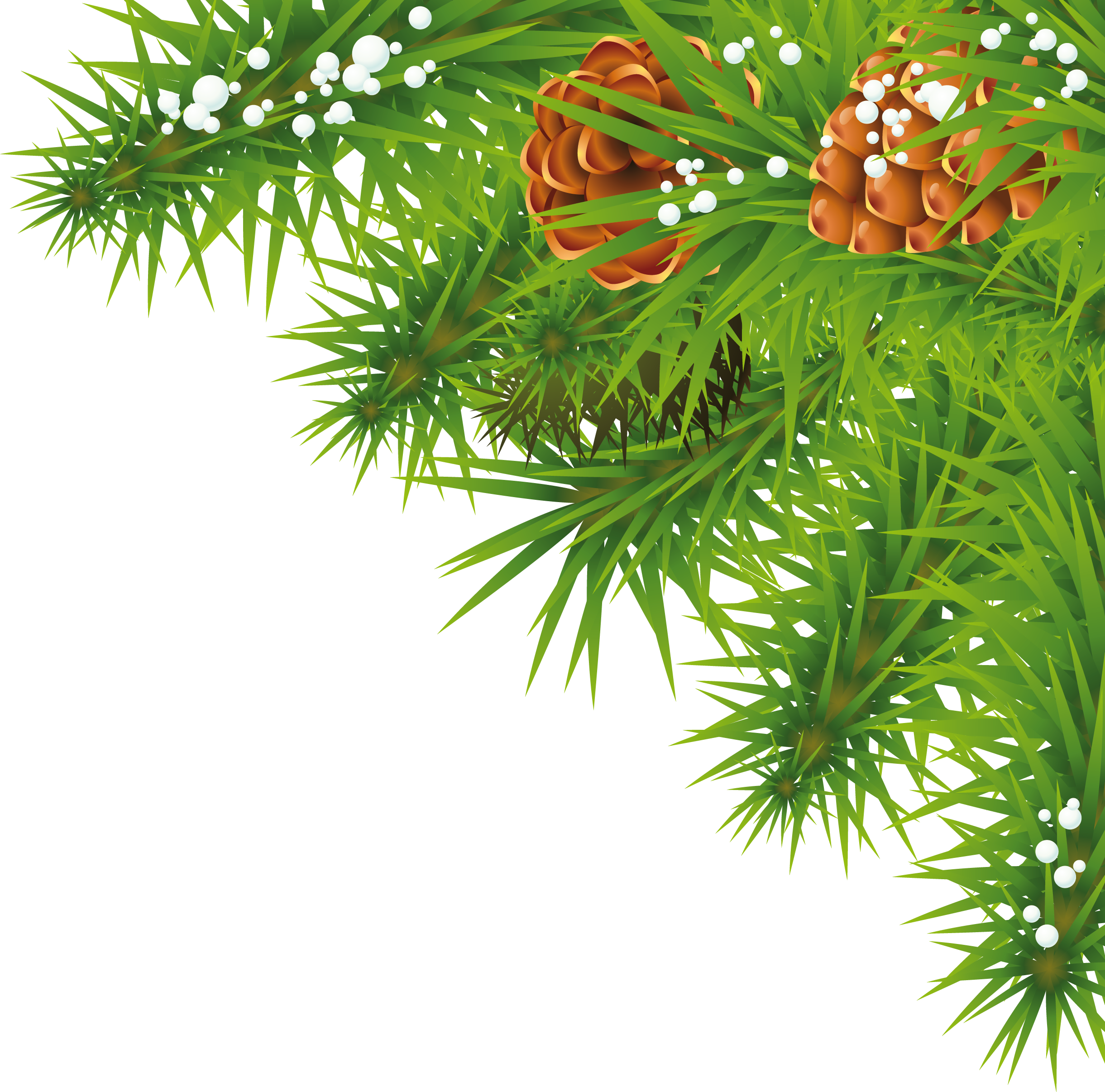 Fir-tree branch PNG image